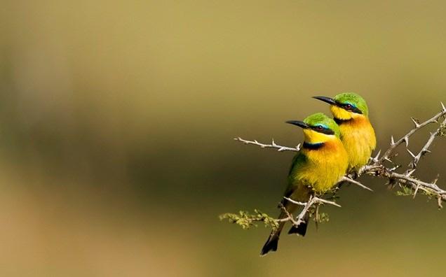 Top 10 bai van ta con chim lop 2 moi nhat1 - Top 10 bài văn tả con chim lớp 2 mới nhất