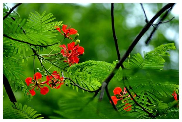 ta loai cay em yeu quy - Top 10 bài văn tả một loài cây mà em yêu thích lớp 2 mới nhất