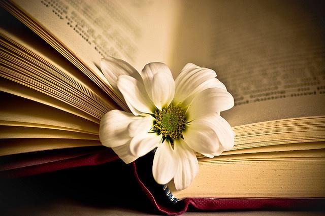 sang tac mot truyen ngan co y nghia giao duc 1 - Top 6 bài văn sáng tác truyện ngắn có tác dụng giáo dục lớp 10 mới nhất