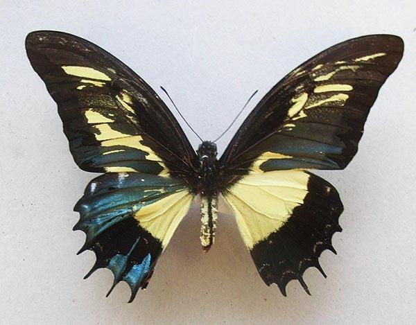 ta con buom lop 4 1 - Top 8 bài văn tả con bướm lớp 4 mới nhất