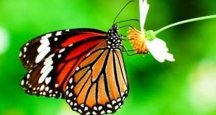 ta con buom lop 4 310x165 - Top 8 bài văn tả con bướm lớp 4 mới nhất