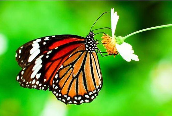 ta con buom lop 4 - Top 8 bài văn tả con bướm lớp 4 mới nhất
