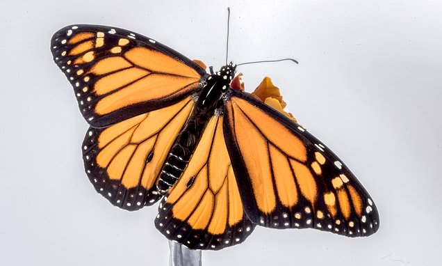 ta con buom - Top 8 bài văn tả con bướm lớp 4 mới nhất