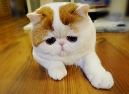 ta con meo 1 - Top 10 bài văn tả con mèo lớp 3 mới nhất