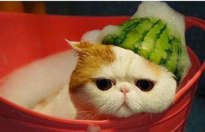 ta con meo - Top 10 bài văn tả con mèo lớp 3 mới nhất