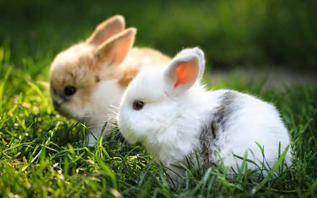 ta con tho lop 3 2 - Top 10 bài văn tả con thỏ lớp 3 mới nhất