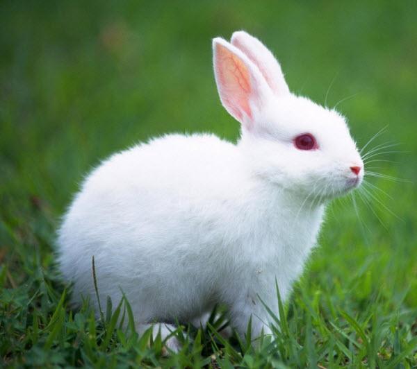 ta con tho lop 3 - Top 10 bài văn tả con thỏ lớp 3 mới nhất