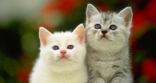 thuyet minh ve con meo 1 310x165 - Top 7 bài văn thuyết minh về con mèo lớp 9 mới nhất