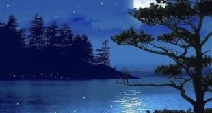 Top 10 bài văn mẫu phát biểu cảm nghĩ về bài thơ Cảnh khuya