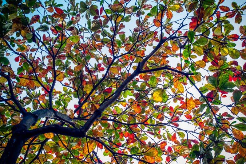 unnamed file 578 - Tả cây bàng lớp 4 hay nhất - 3 bài văn về cây bàng ở sân trường em